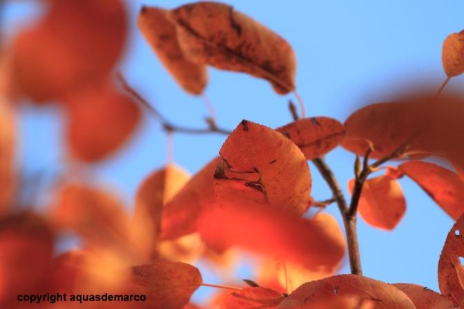Herbst158