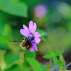 #Bienen, es summt